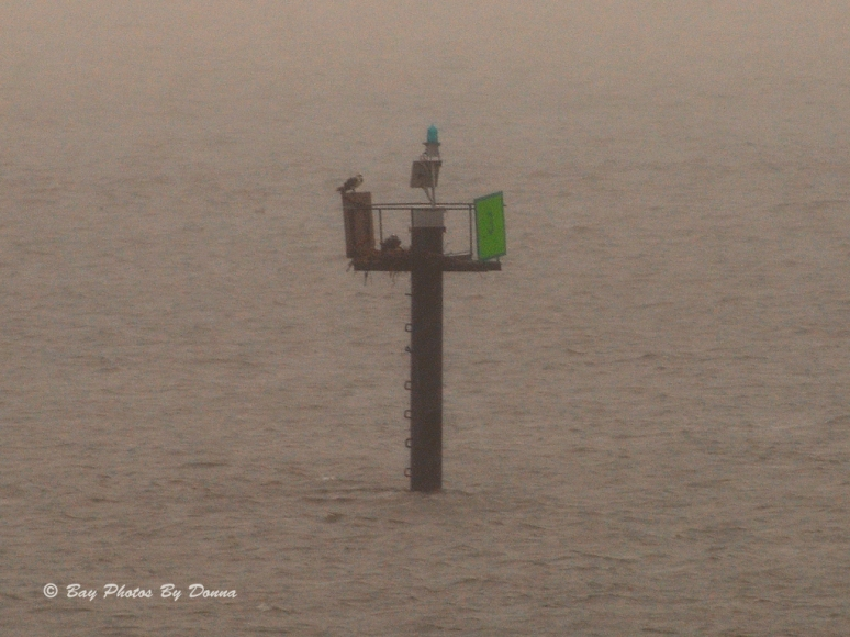 Southend Kent Narrows Channel Marker #3 - this Osprey pair has returned! 3/30/14