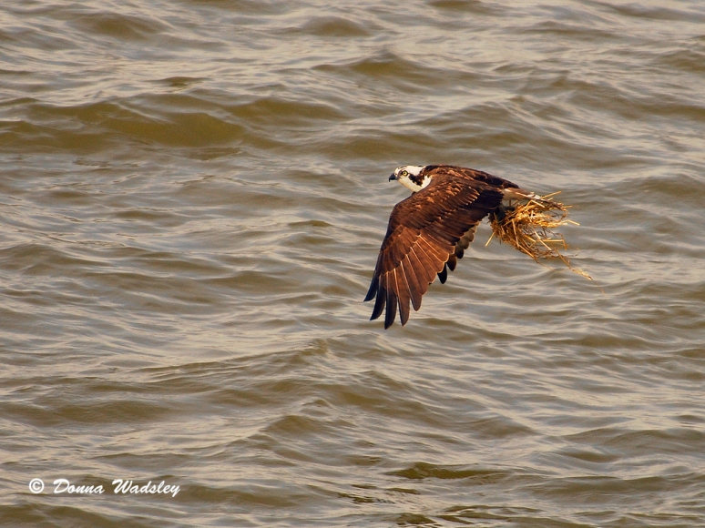 CBEC Osprey taking his turn.
