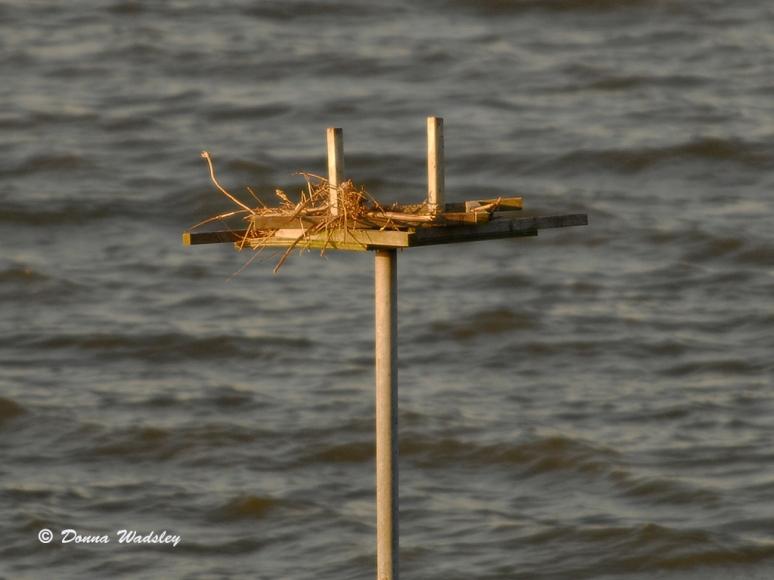 Oyster Cove Osprey Nest Platform