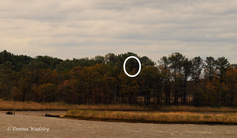 Eagle Nest (circled) and Osprey nest platform