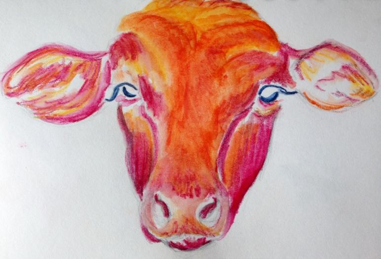 022316 cow