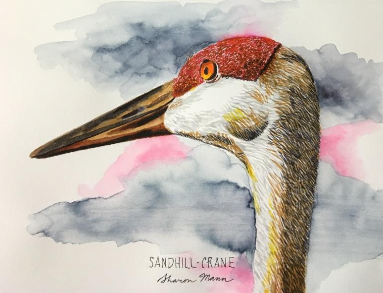 Sandhill Crane - Sharon Mann