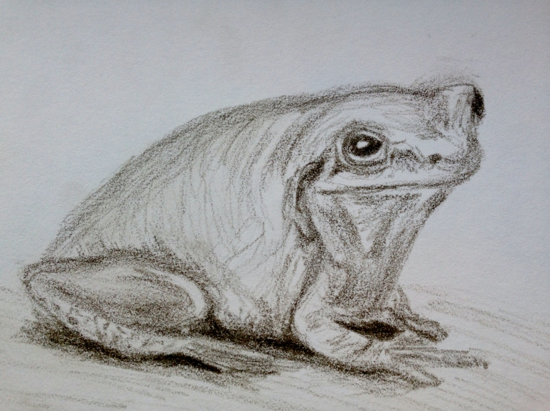 030316 frog