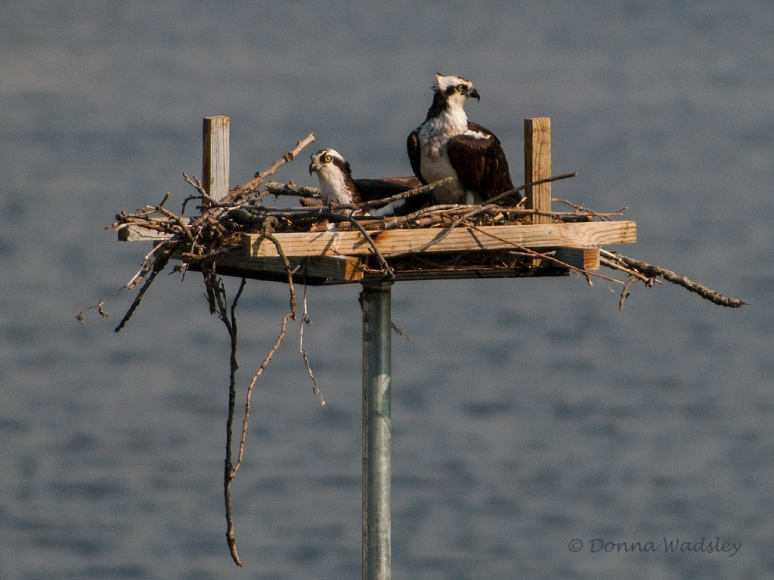 _DSC0012-1 5418 nest