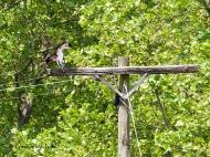 Beau's telephone perch