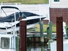 Beau's barge perch