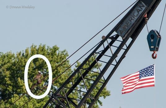 Beau's crane perch