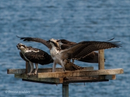 Sibling rivalry at feeding time.