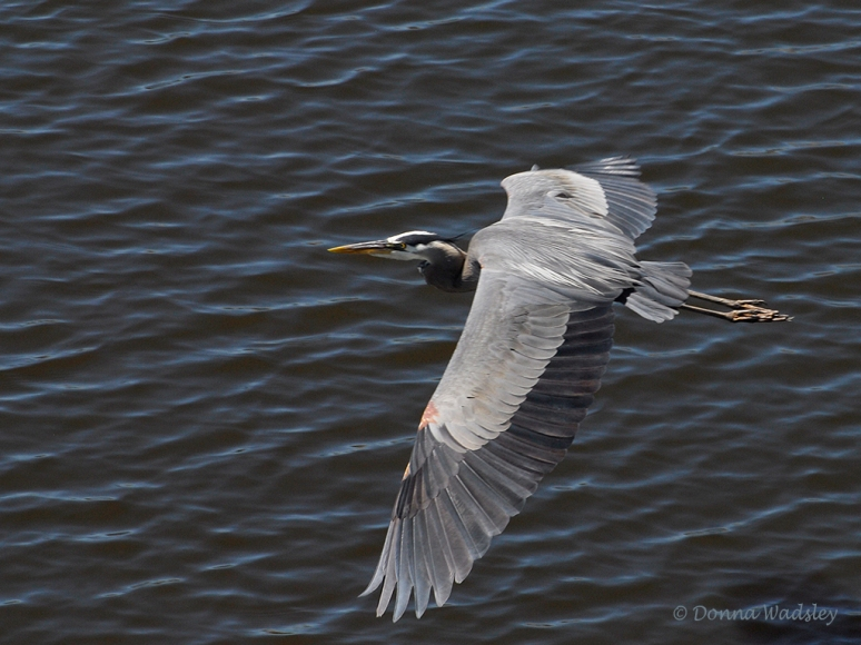 GBH Fly-by 03