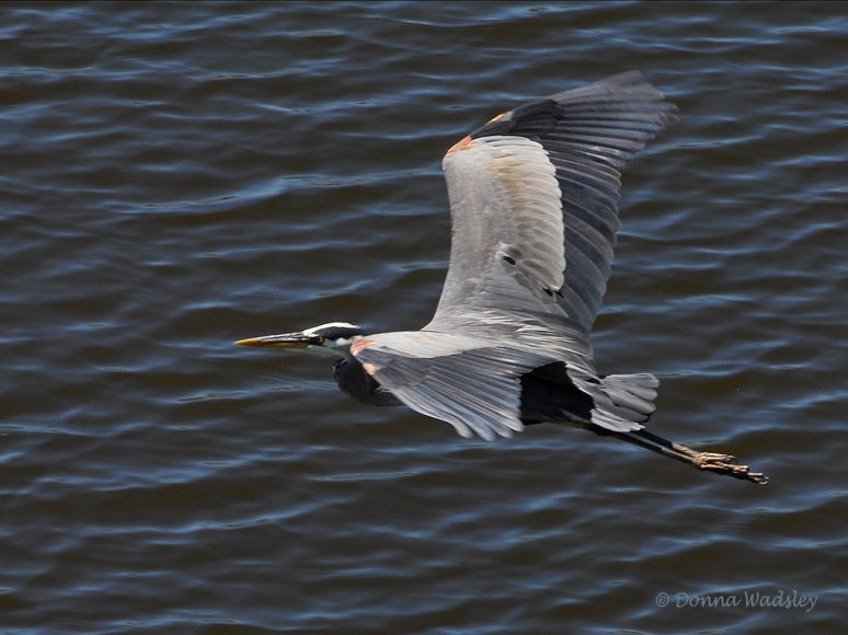 GBH Fly-by 02