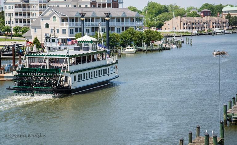 """Dorothy Megan"" Paddle Boat Tour"