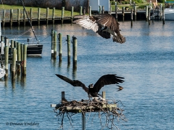 The Osprey intruder aborts the landing