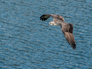 Youngest 'teen' (male) in flight