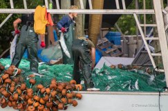 Removing fish from the net