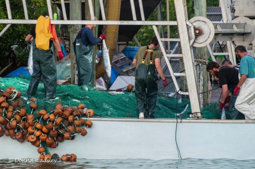 Fish were removed for hours