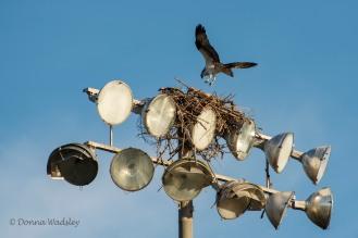High School field lights nest