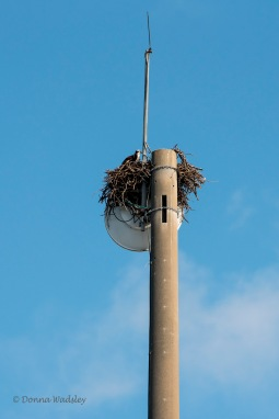 Communications tower nest