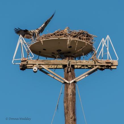 Satellite dish nest