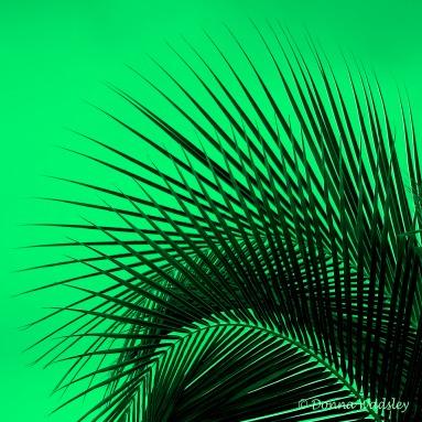 DSC_3038-1 21920 green