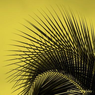 DSC_3038-1 21920 yellow