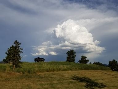 Bison statue and big cloud