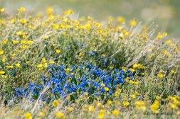 Wildflowers #5