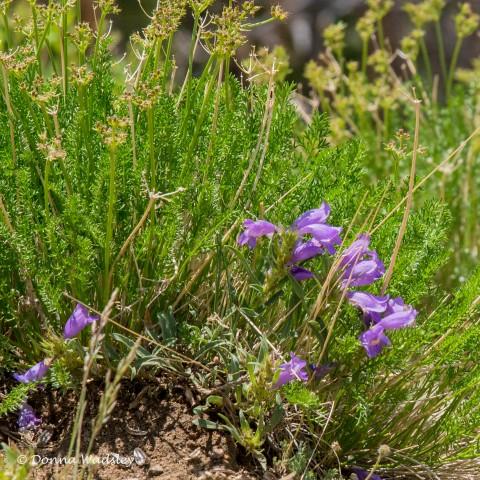 Wildflower #8