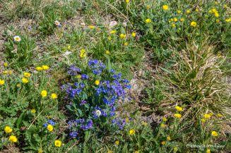 Wildflowers #17